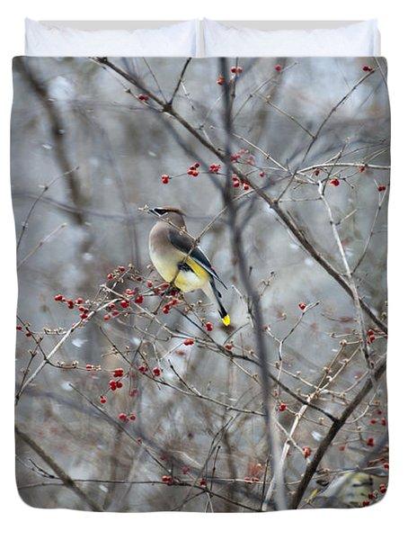 Cedar Wax Wing 3 Duvet Cover by David Arment