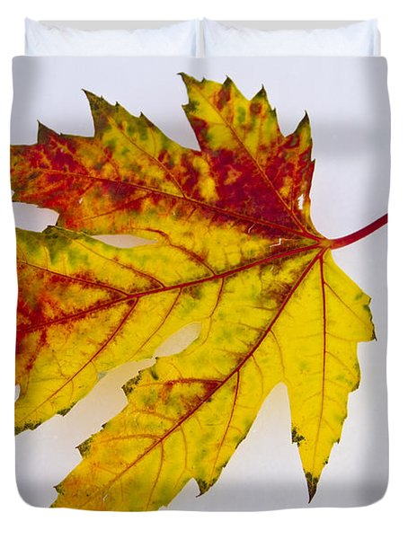 Changing Autumn Leaf In The Snow Duvet Cover by James BO  Insogna