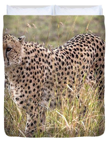 Cheetah Acinonyx Jubatus, Masai Mara Duvet Cover by Chris Upton