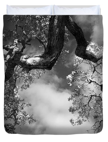 Cloudy Oak Duvet Cover by Laurie Search