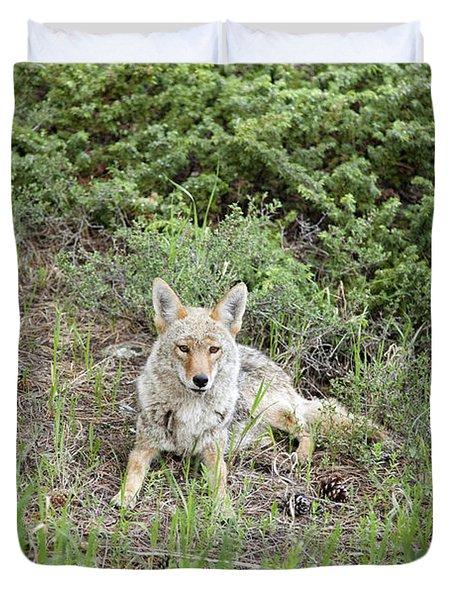 Colorado Coyote Duvet Cover by Jenna Szerlag