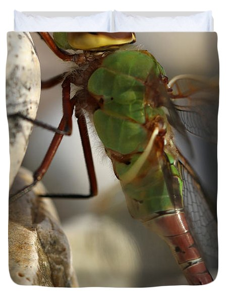 Common Green Darner Dragonfly Duvet Cover by Juergen Roth