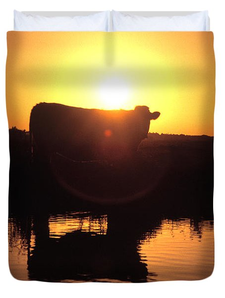 Cow at Sundown Duvet Cover by Picture Partners and Photo Researchers