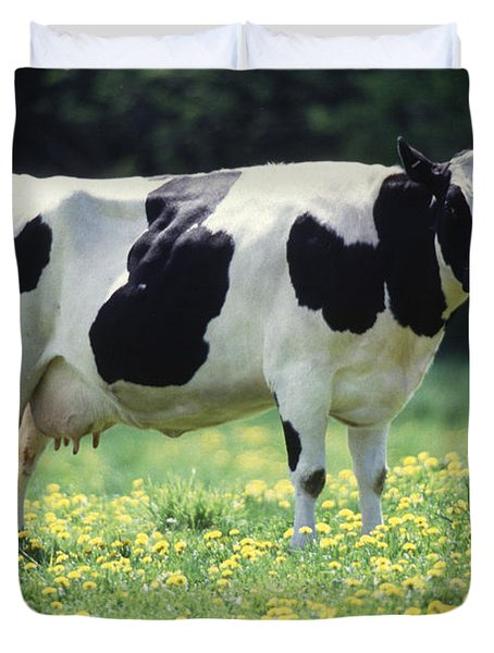 Cow In Pasture Duvet Cover by Science Source