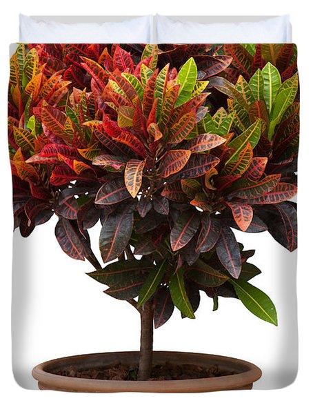Croton Tree In Flowerpot Duvet Cover by Atiketta Sangasaeng