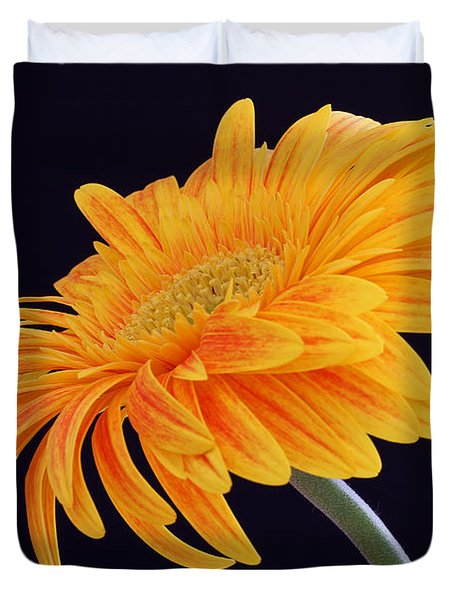 Daisy Of Joy Duvet Cover by Juergen Roth