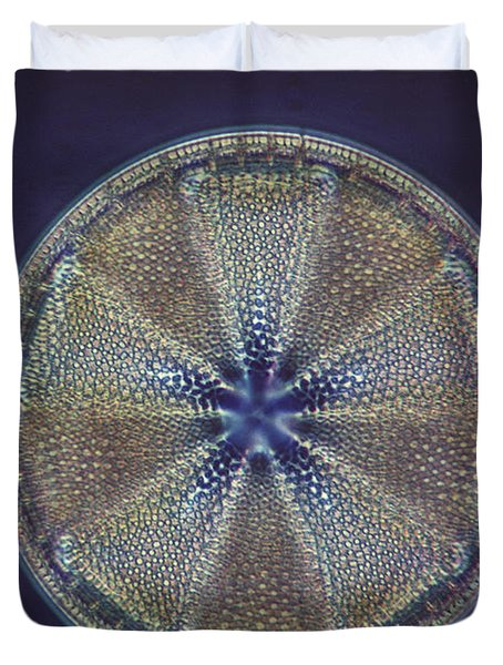 Diatom - Actinoptychus Heliopelta Duvet Cover by Eric V. Grave