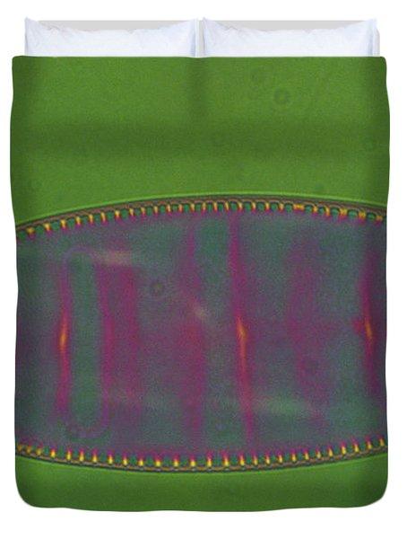 Diatom - Surirella Duvet Cover by Eric V. Grave