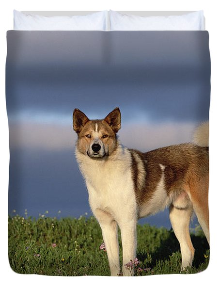 Domestic Dog Canis Familiaris, Taymyr Duvet Cover by Konrad Wothe