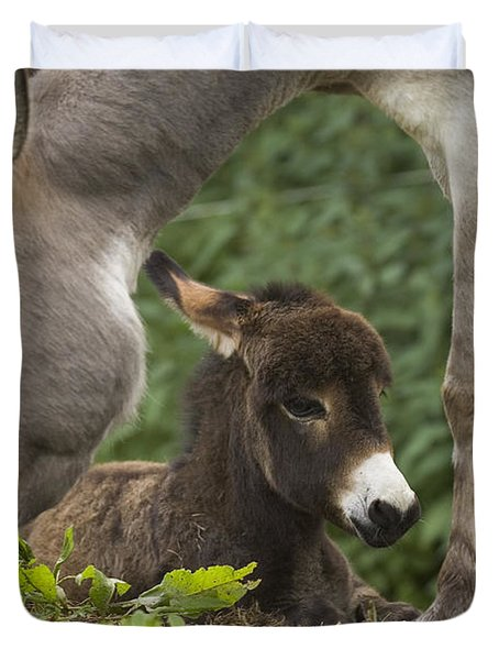 Donkey Equus Asinus Adult With Foal Duvet Cover by Konrad Wothe