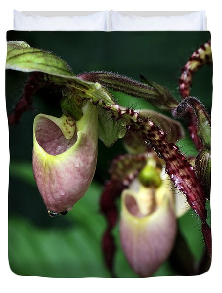 Drippy Lady Slipper Orchids Duvet Cover by Sabrina L Ryan