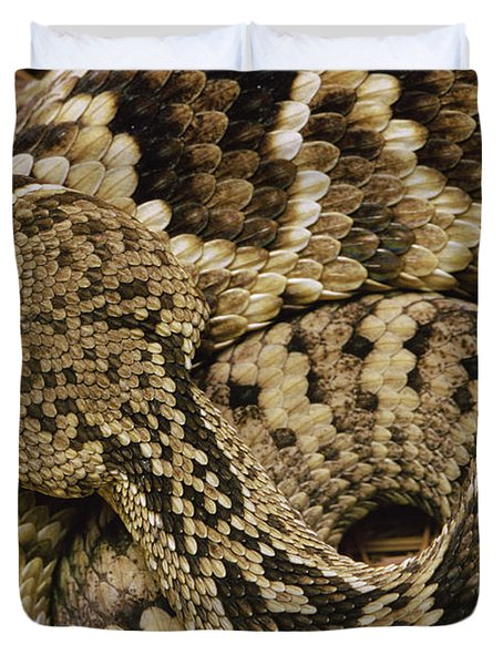 Eastern Diamondback Rattlesnake Duvet Cover by Gerry Ellis