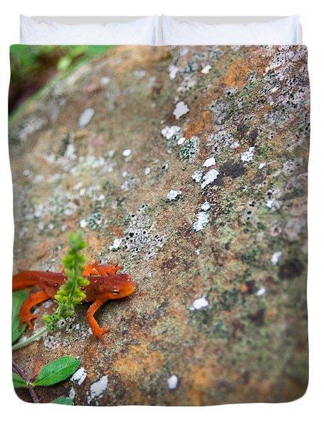 Eastern Newt Juvenile 8 Duvet Cover by Douglas Barnett
