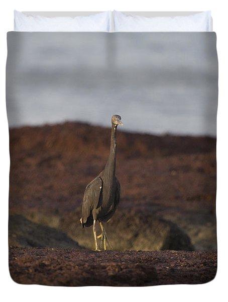 Eastern Reef Egret-dark Morph Duvet Cover by Douglas Barnard