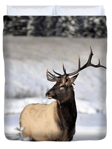 Elk Cervus Canadensis Bull Elk During Duvet Cover by Richard Wear