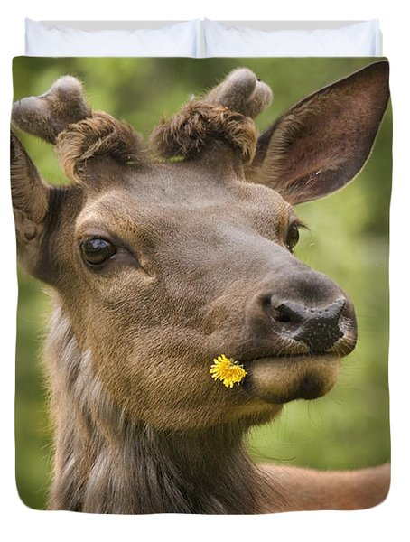 Elk Cervus Canadensis With Dandelion In Duvet Cover by Philippe Widling