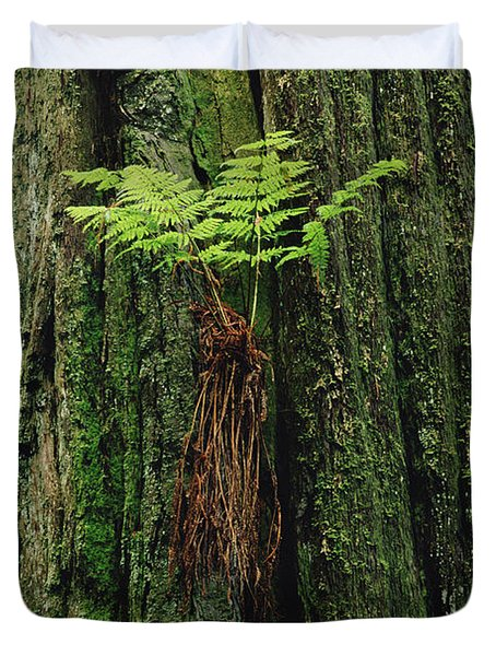 Epiphytic Fern Growing On Redwood Duvet Cover by Gerry Ellis