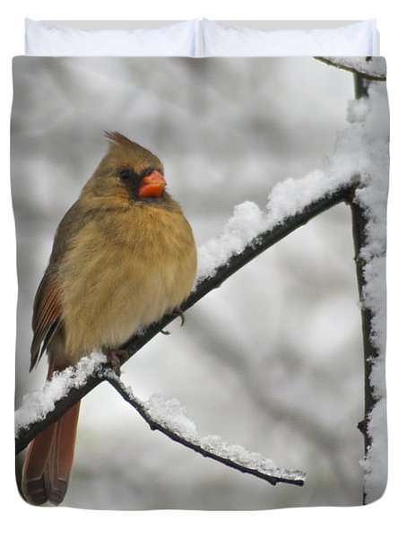 Female Cardinal 3656 Duvet Cover by Michael Peychich