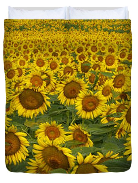 Field Of Domestic Sunflowers Duvet Cover by Kenneth M Highfill and Photo Researchers