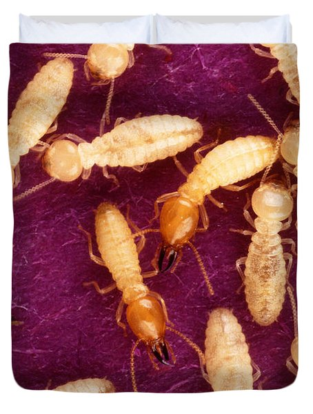 Formosan Termites Duvet Cover by Science Source