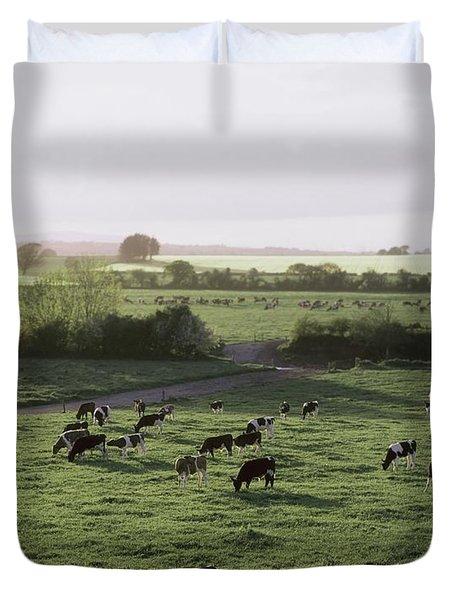 Friesian Bullocks, Ireland Herd Of Duvet Cover by The Irish Image Collection