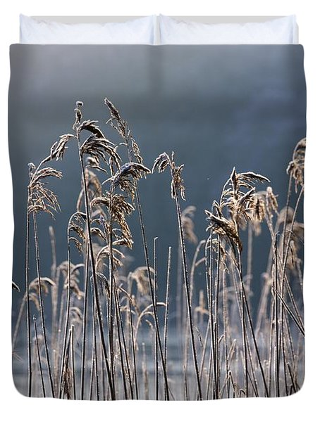 Frozen Reeds At The Shore Of A Lake Duvet Cover by John Short