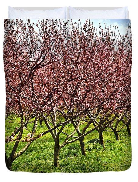 Fruit orchard Duvet Cover by Elena Elisseeva