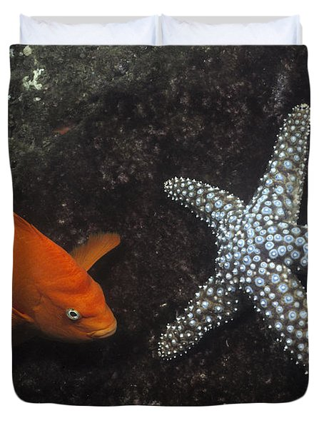 Garibaldi With Starfish Underwater Duvet Cover by Flip Nicklin