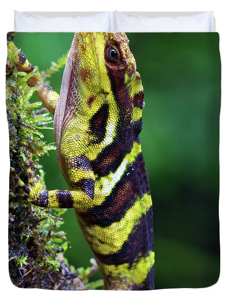 Giant Anole Dactyloa Microtus Male Duvet Cover by James Christensen
