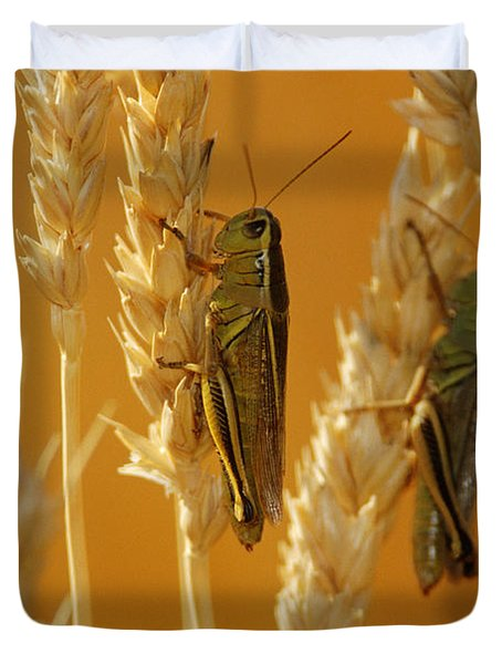 Grasshoppers On Wheat, Treherne Duvet Cover by Mike Grandmailson