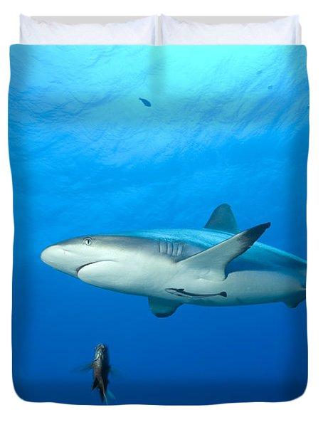 Gray Reef Shark. Papua New Guinea Duvet Cover by Steve Jones