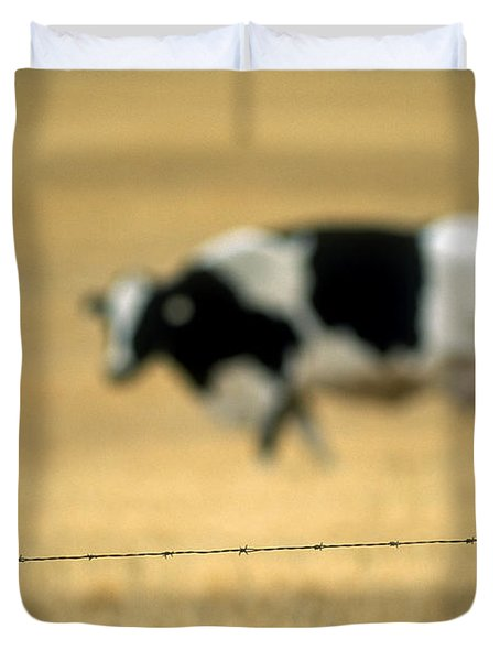 Grazing Cow, Alberta, Canada Duvet Cover by Ron Watts