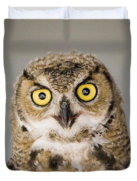 Great Horned Owl Duvet Cover by Henry Georgi Photography Inc
