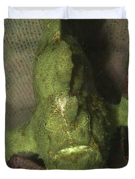Green Frogfish In Sponge, North Duvet Cover by Mathieu Meur