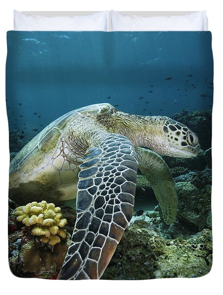 Green Sea Turtle Chelonia Mydas Duvet Cover by Hiroya Minakuchi