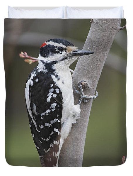 Hairy Woodpecker Picoides Villosus Duvet Cover by Amy Kay
