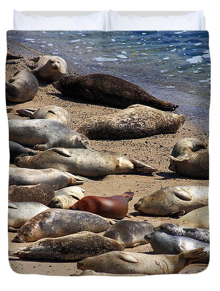 Harbor Seals Sunbathing On The Beach . 40d7553 Duvet Cover by Wingsdomain Art and Photography