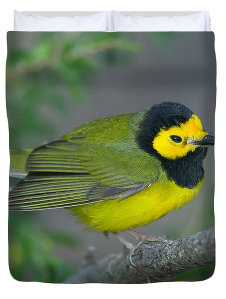 Hooded Warbler Duvet Cover by Clarence Holmes