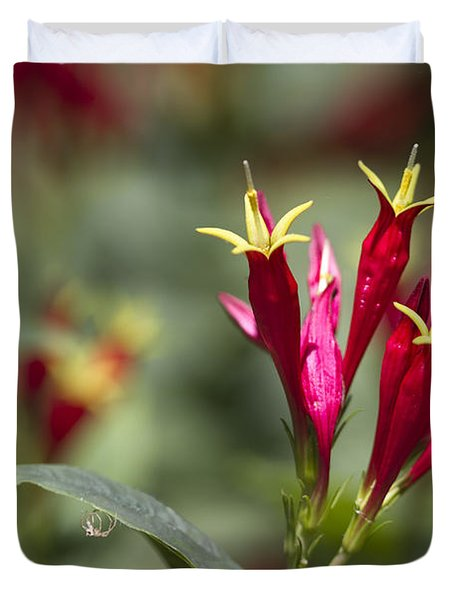 Indian Pink - Spigelia Marilandica - Firecracker Wildflowers Duvet Cover by Kathy Clark