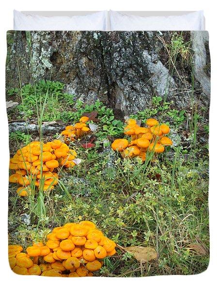 Jack Olantern Mushrooms 16 Duvet Cover by Douglas Barnett