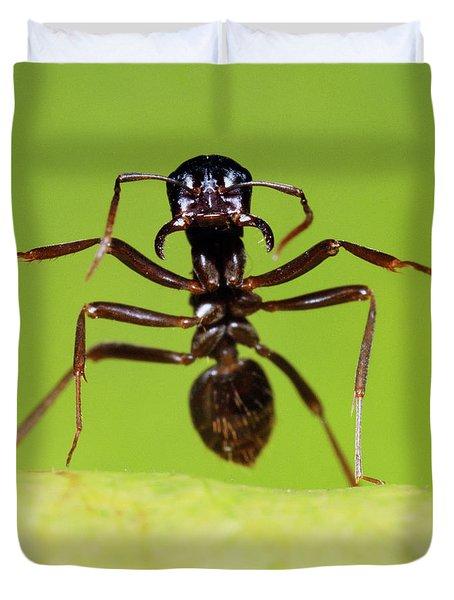 Japanese Slave-making Ant Polyergus Duvet Cover by Satoshi Kuribayashi