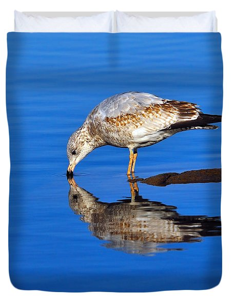 Juvenile Ring-billed Gull  Duvet Cover by Tony Beck