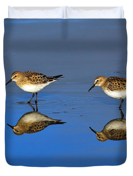 Juvenile White-rumped Sandpipers Duvet Cover by Tony Beck