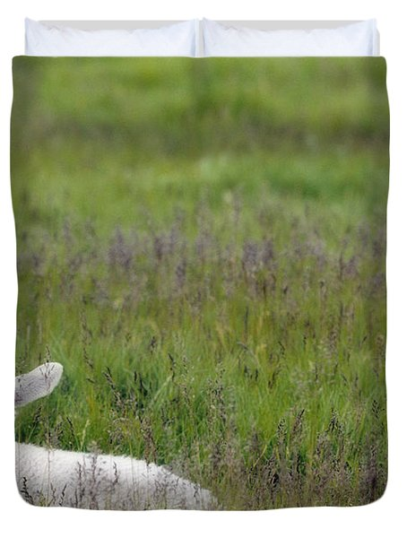 Lamb In Pasture, Alberta, Canada Duvet Cover by Darwin Wiggett