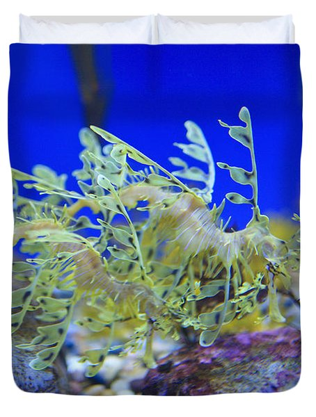 Leafy Seadragon Phycodurus Eques At The Duvet Cover by Stuart Westmorland