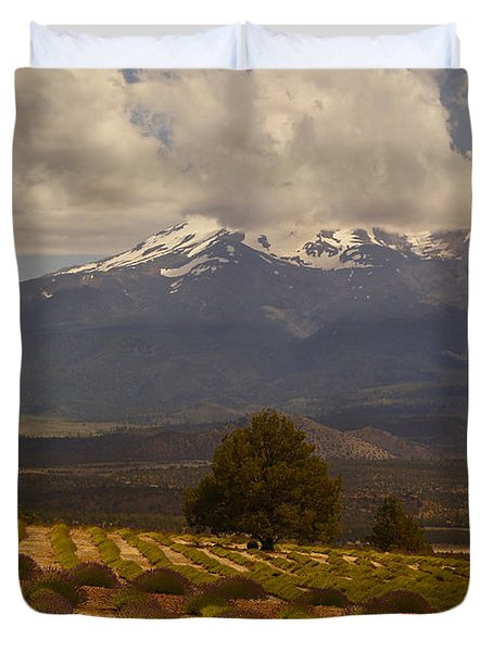 Lone Tree And Lavender Fields Duvet Cover by Mick Anderson