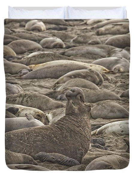 Male Elephant Seal Barking Amidst Duvet Cover by Robert Postma