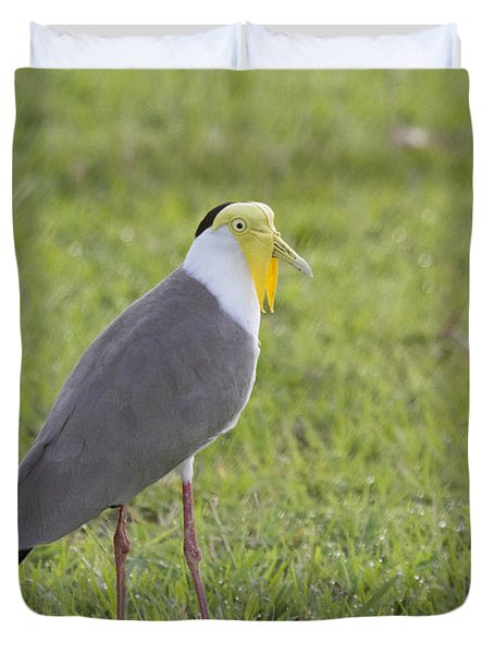 Masked Lapwing Duvet Cover by Douglas Barnard