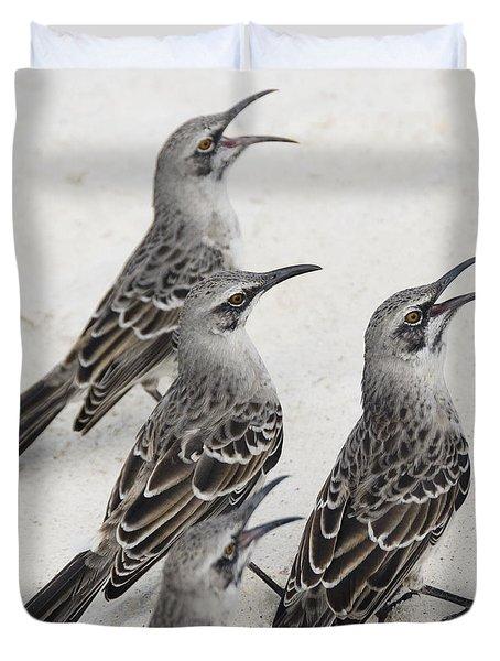 Mockingbirds Mimidae Galapagos, Equador Duvet Cover by Keith Levit