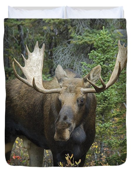 Moose Alces Alces In The Forest Alberta Duvet Cover by Philippe Widling